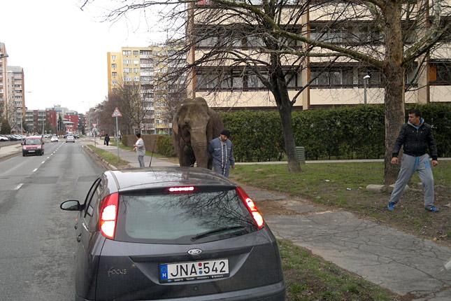 http://static4.origos.hu/i/1303/20130321-elszabadult-elefant-zalaegerszeg-1.jpg